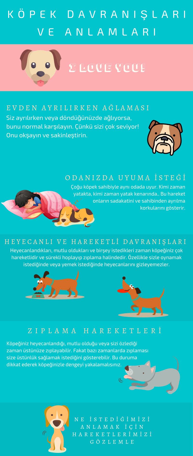 Köpek davranışlarının anlamı infografik