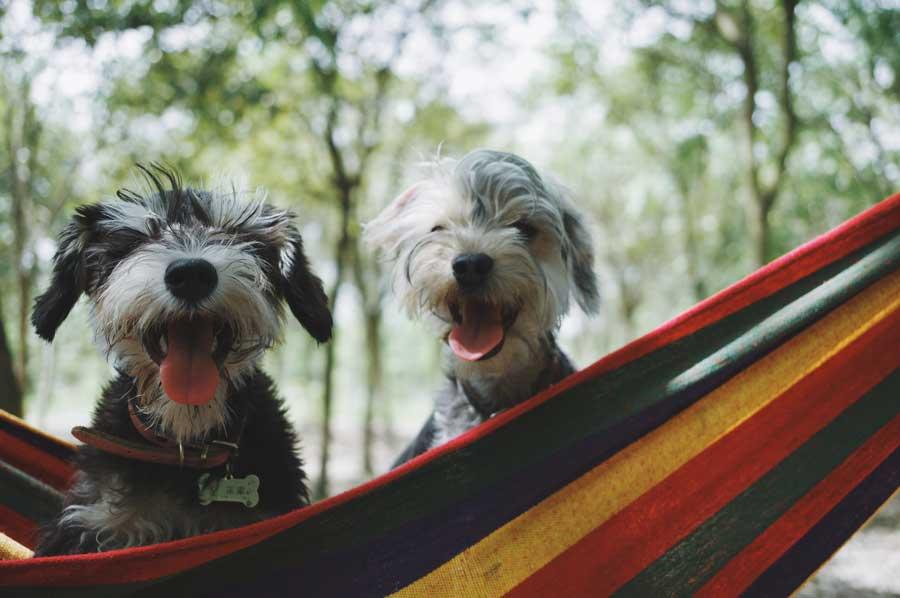 Köpek Patisi ve Tırnak Bakımı Nasıl Yapılır?