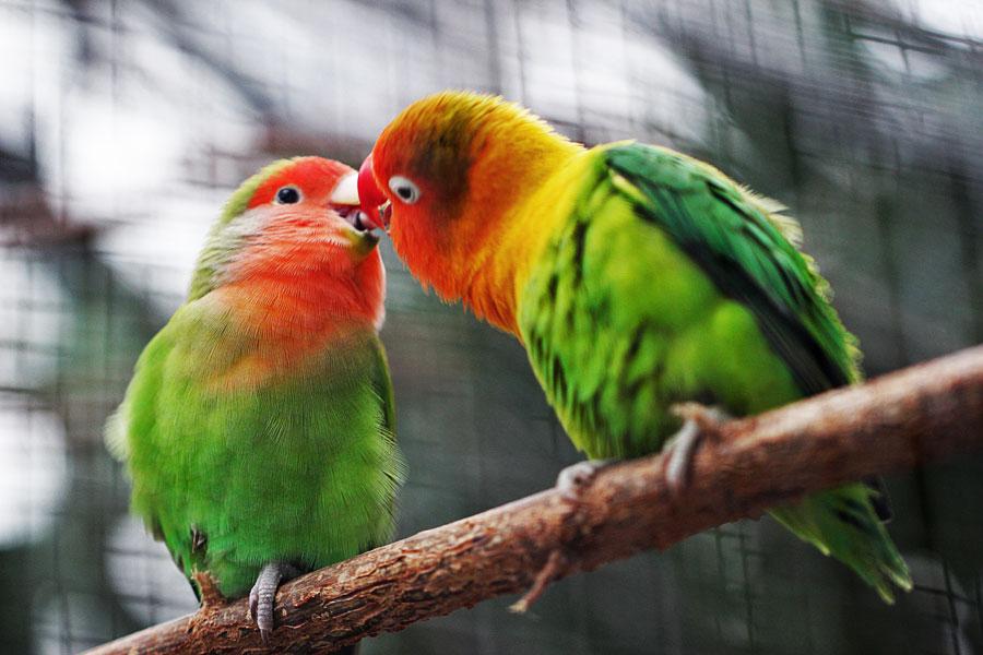 papağan eğitimi nasıl yapılır