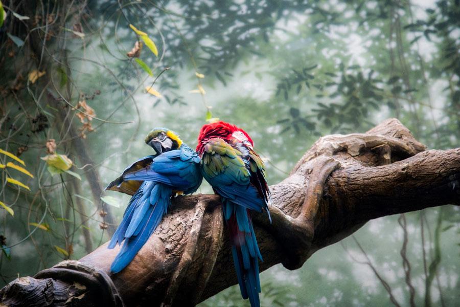 Papağan Eğitimi Nasıl Yapılır?
