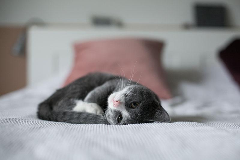 Yavru Kedi Nasıl Beslenir: Miktar, Yöntem ve Yemek Bilgileri