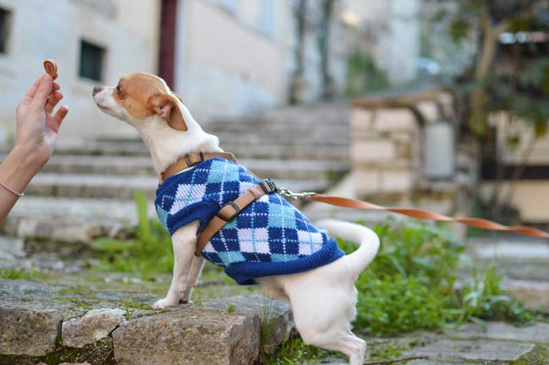 Küçük Köpek Cinsleri ve Bakımları