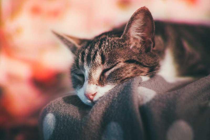 uyuyan kedi, kedi tüy bakımı