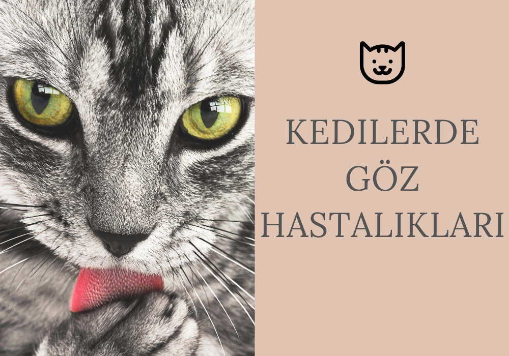 Kedilerde Göz Hastalıkları, Genel Bilgiler ve Tedavi Yöntemleri
