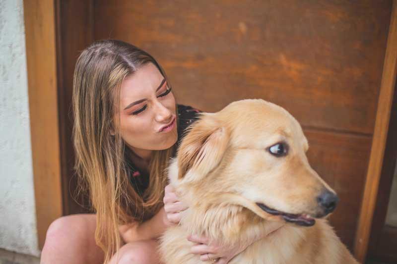 köpek seçimi, büyük köpek seçimi