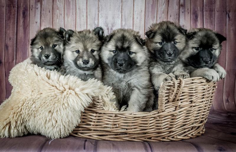 Yavru Köpek Ne Yer? / Yavru Köpek Beslenme Tablosu