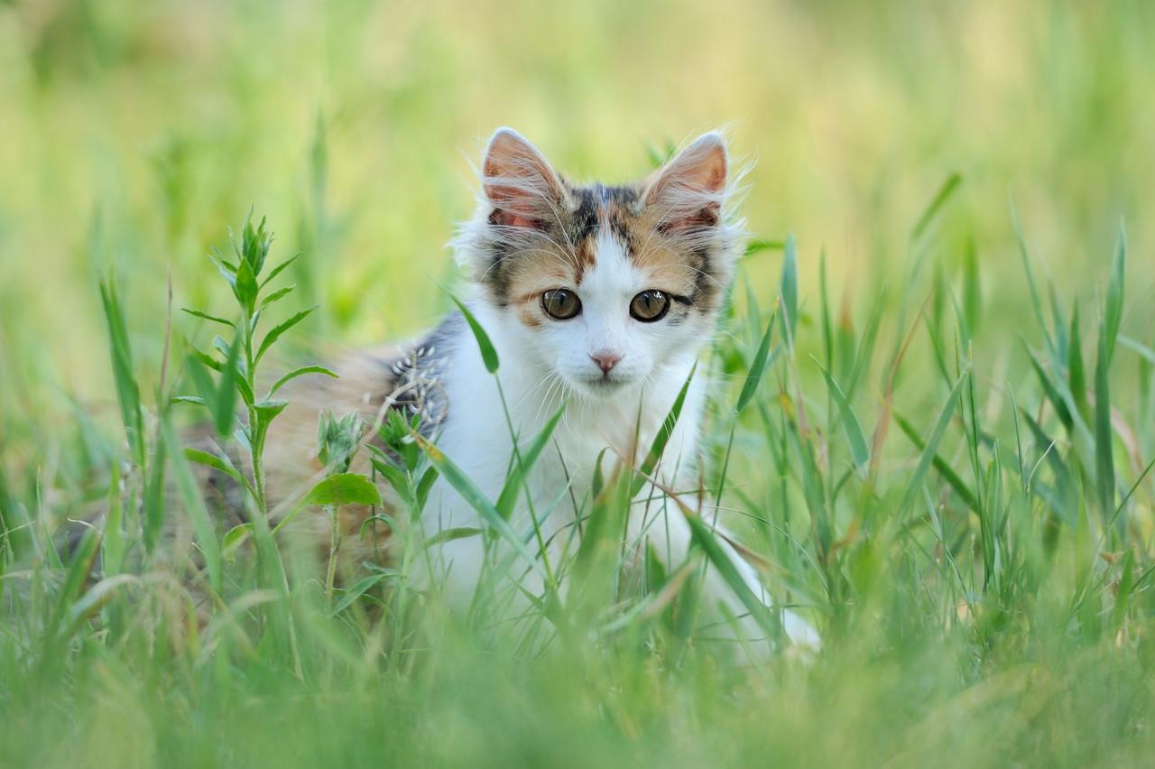 bahçede yaşayan kedi, kedilerde deri hastalıkları