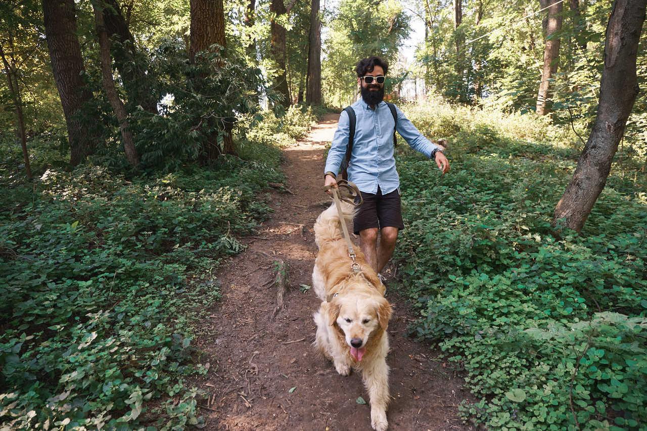 ormanda köpeğiyle yürüyüş yapan adam, Golden Retriever özellikleri