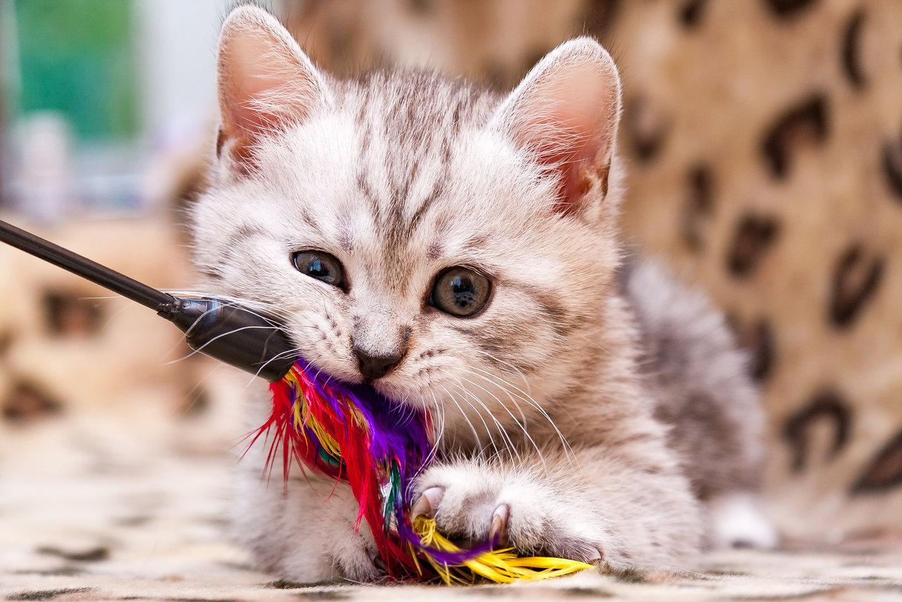 kedi oltası, oyuncak ile oynayan yavru kedi, kedi oyuncağı yapımı