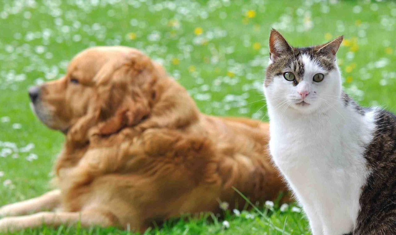 bahçede yanyana duran kedi ve köpek