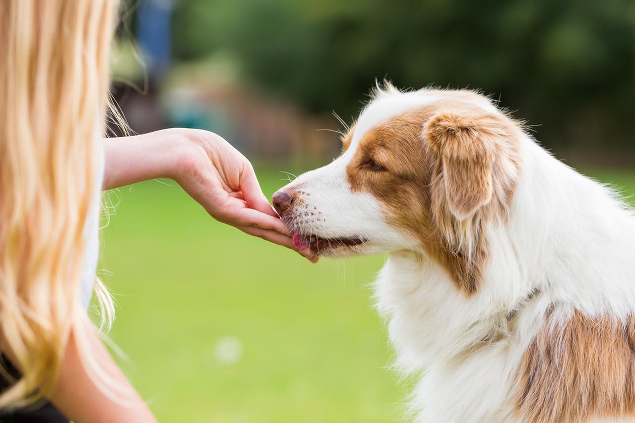 Avcundaki ödül maması ile köpeğini ödüllendiren kadın
