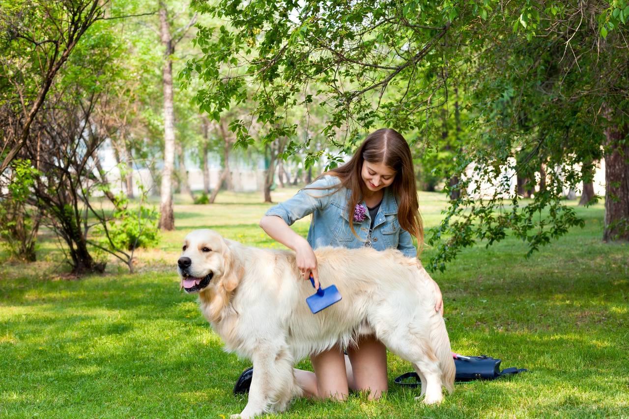 Bahçede Golden Retriever cinsi köpeğinin tüylerini fırçalayan uzun saçlı kadın